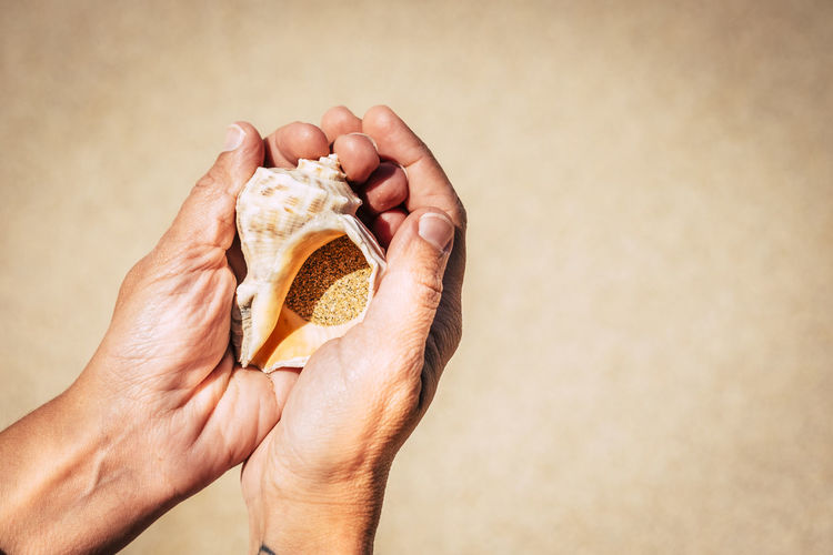 Cropped hands holding seashell at beach