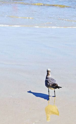 Wildlife Seaside Birds Seagulls Beach Hello World Florida Eye4photography  In The Moment Wideopenspaces