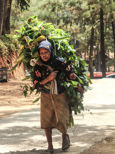 Senior woman carrying plants on road