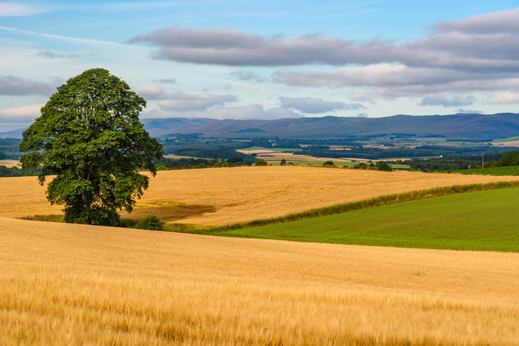 Cairngorms National Park Cairngorms, Scotland  Agriculture Beauty In Nature Cloud - Sky Day Field Grass Growth Landscape Nature No People Outdoors Rural Scene Scenics Sky Tranquil Scene Tranquility Tree The Week On EyeEm Paint The Town Yellow Lost In The Landscape