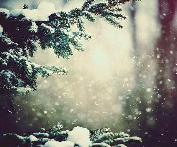 Wintertime Winter White Beautiful