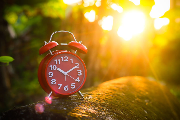 Red Alarm Clock Time Clock Alarm Clock Number Accuracy Clock Face No People Focus On Foreground Tree Lens Flare Close-up Nature Plant Red Shape Communication Outdoors Orange Color Minute Hand Instrument Of Time Hour Hand Red Alarm Clock Clock Hand Clockworks
