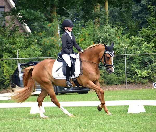 Pony Horses Horse Photography  Dressagehorse Dressage Competition Daughter Eye4photography  Horsesofinstagram