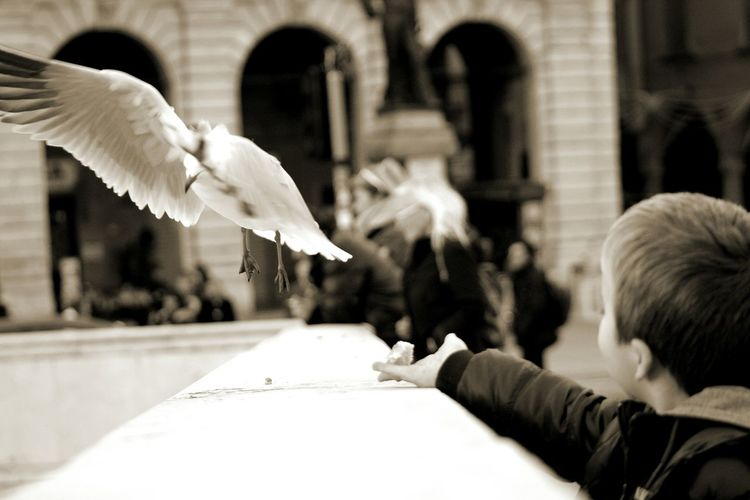 Bird Animals In The Wild Real People Travel Destinations Photoshoot Photography Photographer Focus On Foreground Travel Italia Beauty In Nature Pisa Fiume Arno Pontedimezzo EyeEmNewHere The Great Outdoors - 2017 EyeEm Awards The Photojournalist - 2017 EyeEm Awards