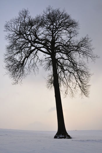 Bare tree against sky during winter