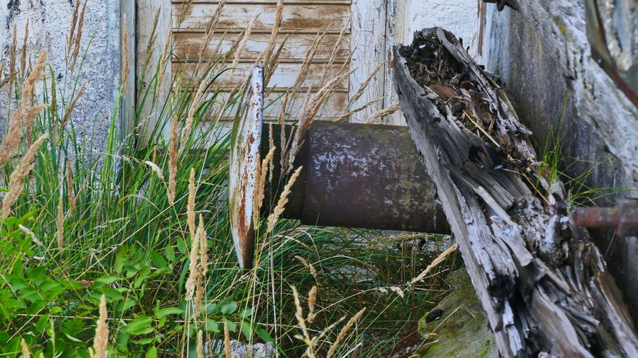 Railroad Old Train Station Architecture Bollard Buffet Built Structure Bumper Close-up Damaged Day Grass Growth Land Nature No People Old Door Outdoors Plant Railway Station Scene Tranquility Tree Tree Trunk Trunk Wood - Material