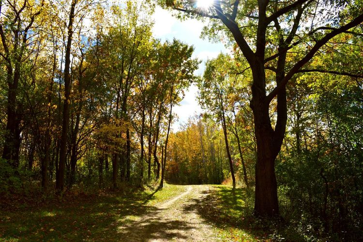 We can escape to the great sunshine Woods Forest Fall Colors Sunshine Sunny Day Exploring Woods Fall Beauty