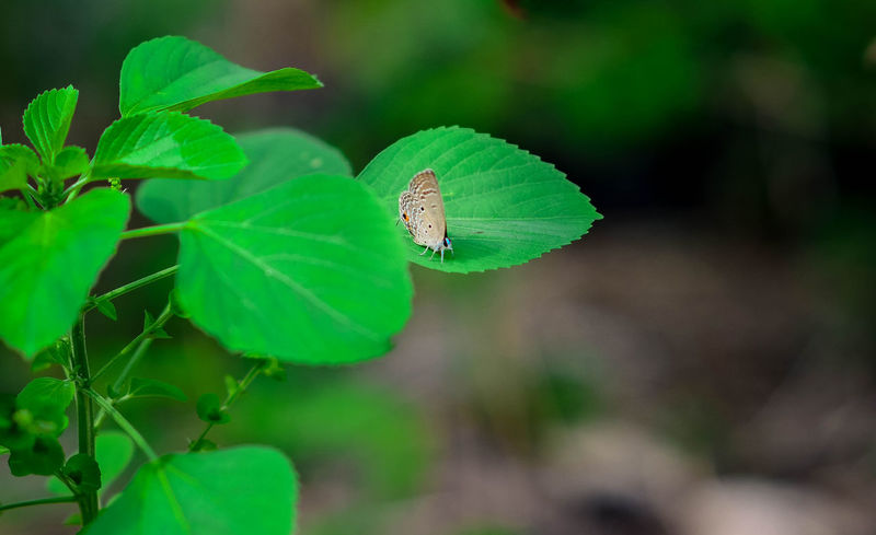 Animal Themes Animal Wing Animals In The Wild Arthropod Beauty In Nature Botany Butterfly Close-up Day Focus On Foreground Fragility Green Green Color Growth Insect Invertebrate Leaf Nature No People One Animal Outdoors Perching Plant Wildlife Zoology