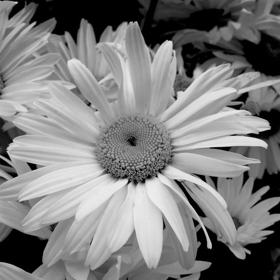 My Friday b&w post... August 2016 Summer2016 Flower Collection Flower Photography Flowerphotography Flowerlovers Flowers, Nature And Beauty Flowers,Plants & Garden Black & White Black And White Collection  Black And White Photography Black And White Flower Collection