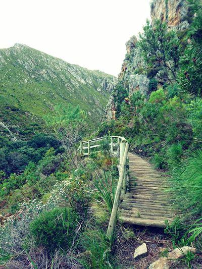 Wooden Bridge Bridge Bridge View Bridge Railing Woodlandwalks Walkway Nature Fynbos Beautiful Nature Mountain Mountains Mountain View