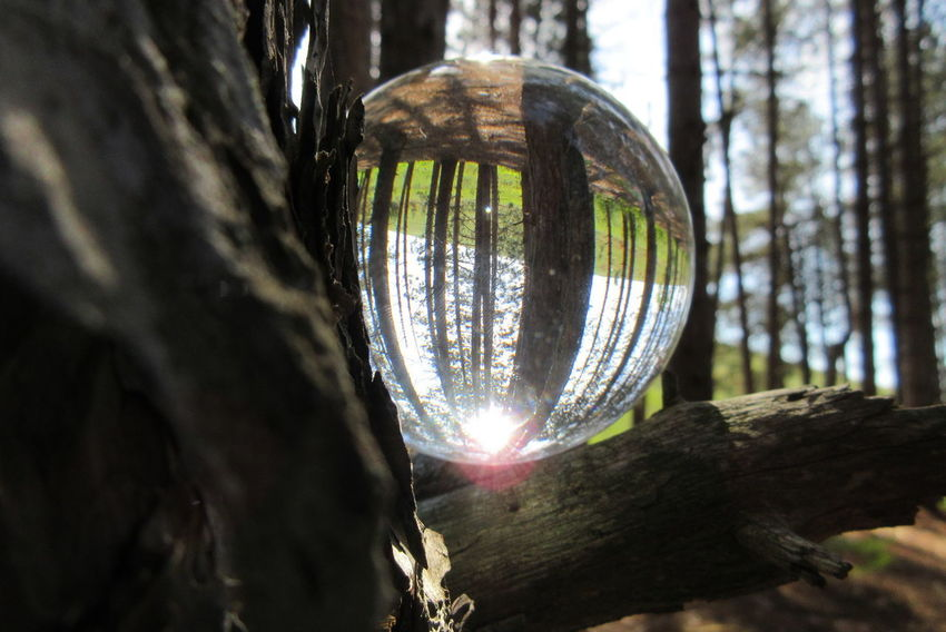 Close-up Crystal Crystal Ball Day Hanging Low Angle View Nature No People Outdoors Shiny Tree Tree Trunk