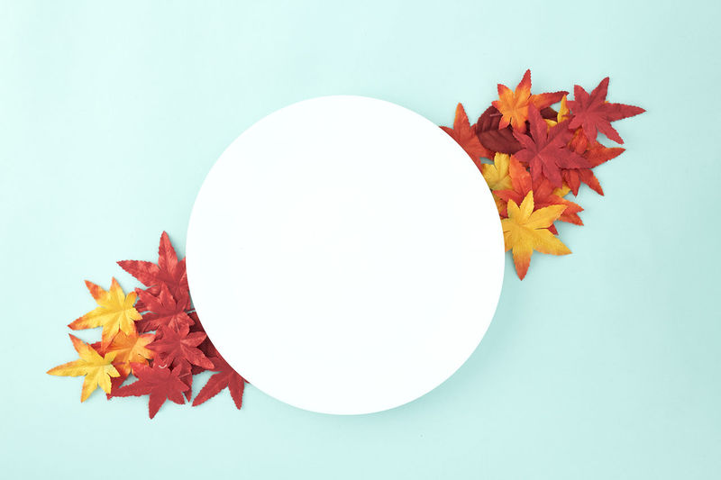 Empty dish decorative Halloween or autumn leaves on pastel pale blue background, with copy space. Flat lay. Sales Holiday Flyer Banner Poster Travel Traveling Traveler Vacation Trip Sale Template Mockup Abstract Art Autumn Leaves Falling 2019 2020 Wreath New Year Halloween Autumn Leaves Autumn Background Plate Minimal Flat Lay Fall Background Leaf Design Frame Orange Concept Composition Green Maple Bright Pattern Forest Decoration Studio Shot Plant Part Indoors  White Background Orange Color Red Cut Out Copy Space Close-up Change Still Life No People Nature Colored Background High Angle View Beauty In Nature Blue Maple Leaf Blue Background