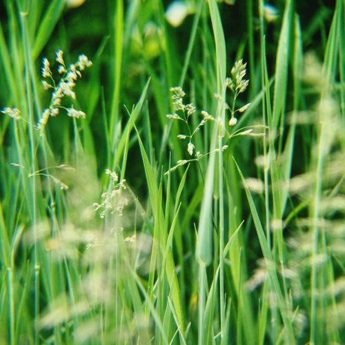 Green Nature Grass Plant Summer 自然 绿色 草 植物 夏 여름 록색 풀 자연