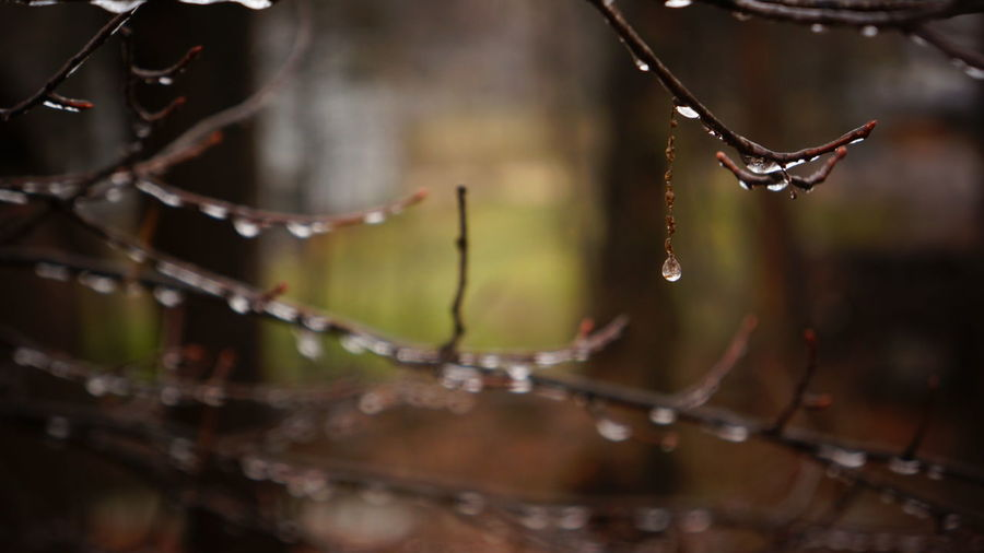 Beauty In Nature Branch Branches Brown Close-up Day Drip Dripping Droplet Fragility Nature No People Outdoors Shiny Twig Water