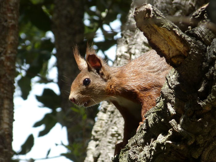 curious squirrel Nature Squirrel Animal Beauty In Nature Curious Fur No People Spip