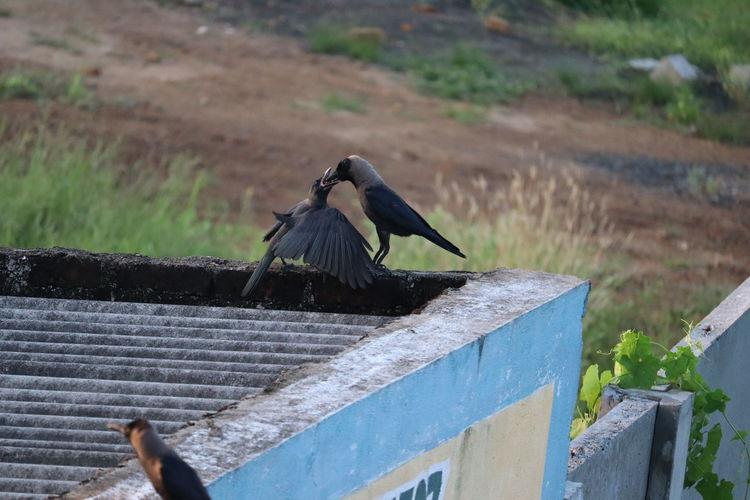 Bird flying over wood