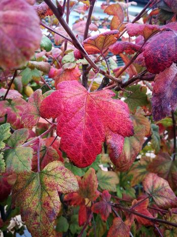 Autumn colours Autumn Autumn colors Leaf Tree Flower Branch Flower Head Red Winter Close-up Plant In Bloom Leaves Fall