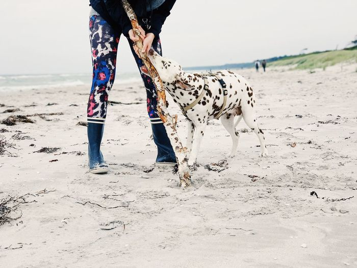 Low section of person with dog walking on beach