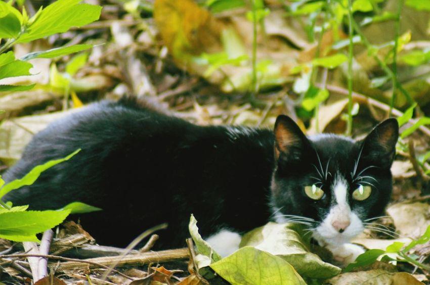 Visita da semana Looking At Camera Pets Feline Animal Themes Domestic Cat A580 Fresh On Eyeem