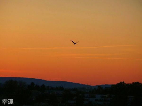 Noedit Nofilter SonyQX10 Sunset Sunsetporn Skyhunter Skyporn Burning Sky Bird Luckyshot EyeEm Best Shots - Nature