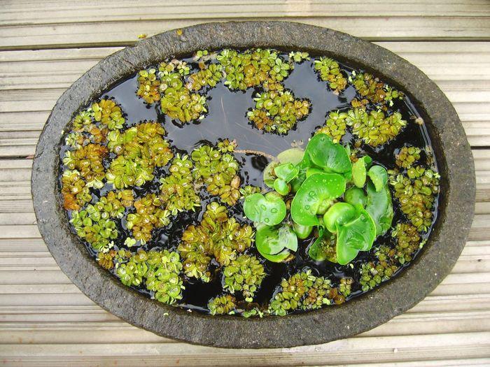 Water Flowers Arrangement Korea