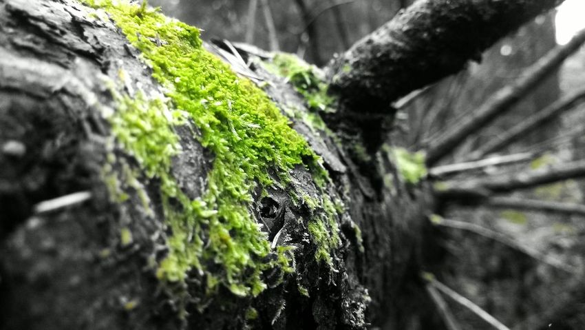 Beauty In Nature Botany Detail Green Green Color Growing Nature Tree Tree Trunk Black Color No People