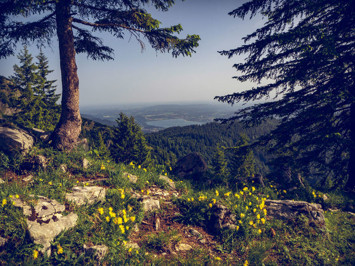 View to Tegernsee from the way up to Hirschberg peak. Hirschberg, Kreuth, Bavaria, Germany, June 2019 Germany Hirschberg Tergernsee Tegernsee Hirschberg Plant Scenics - Nature Tree Tranquility Beauty In Nature Tranquil Scene Mountain Landscape Sky Nature Environment Non-urban Scene No People Growth Land Mountain Range Idyllic Day Forest Outdoors Tegernseer Tal Lake Lake View Coniferous Tree Blooming Flowers Wild Flowers Idyllic Scenery Blue Sky