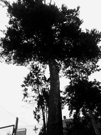 Black Blackandwhite PLZ FOLLOW ME Followme Follow #f4f #followme #TagsForLikes #TFLers #followforfollow #follow4follow #teamfollowback #followher #followbackteam #followh Tree Tree Trunk Sky Architecture