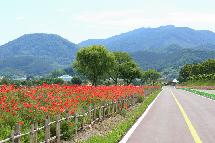 Scenic view of flowering plants by road against sky
