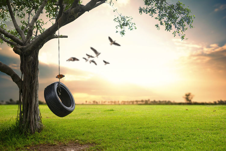 Butterfly on tire swing against birds flying in mid-air