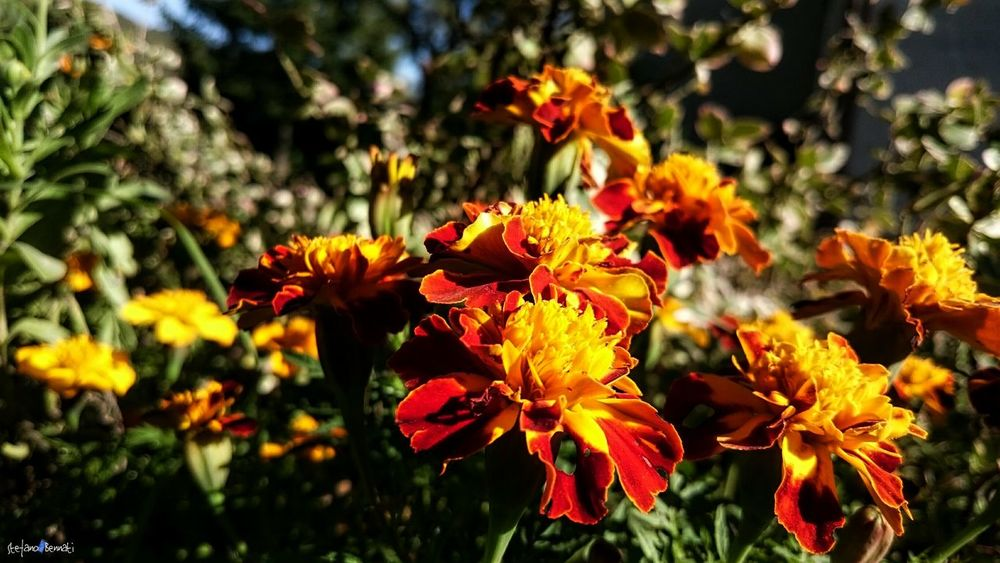 Fall Under The House Autumn Macro Nature Beauty In Nature Flower Flower Head Florex Z3 Xperia Garden Tranquil Scene Italy🇮🇹