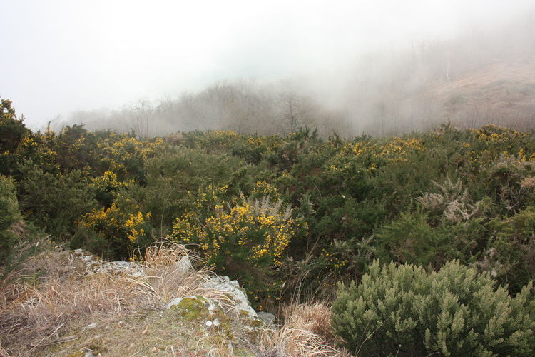 thick and dense fog between the peaks of the Apuan Alps in Tuscany Thick Dense Fog Foggy Morning Light Blur Twilight Sky White Peak Peaks Valley Tuscany Apuan Alps Alps Apennines Mountain Mountains Hill Hills Cliff Cliffs Apuane Apuane Mountains