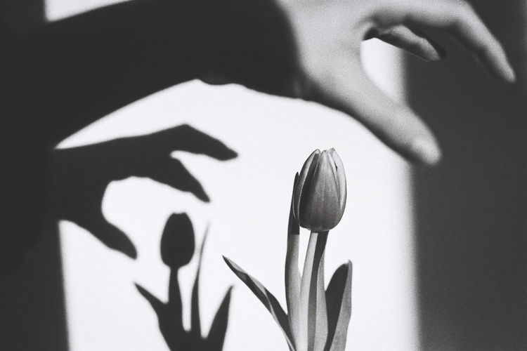 Cropped Hand Of Person Reaching Flower Against Wall