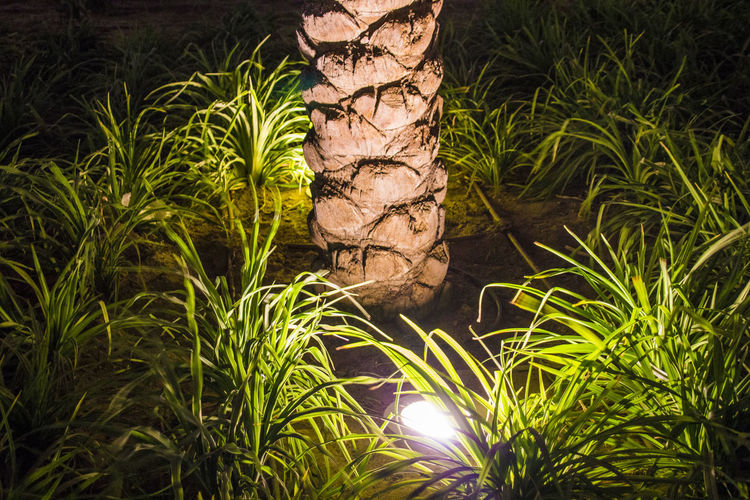 Light Grass