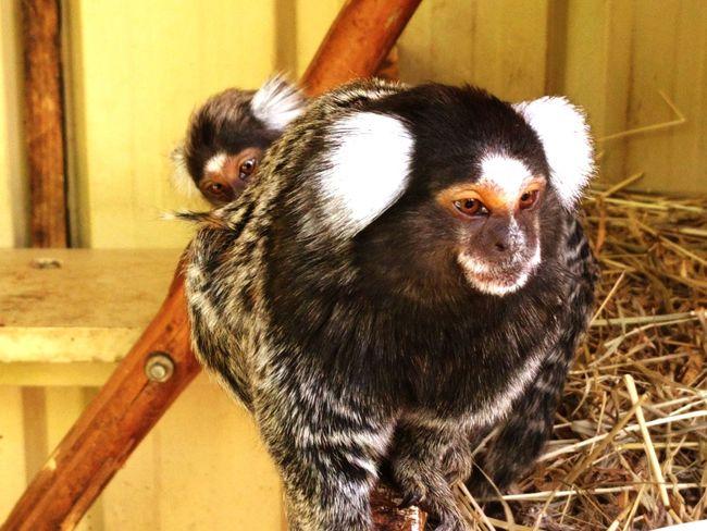 Animal Themes Close-up Tasmania Australia Cage Animals In Captivity