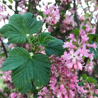 Growth Flowering Plant Flower Pink Color Beauty In Nature Fragility Freshness Nature Vulnerability  Day Leaf Tree Plant Part Close-up Green Color Focus On Foreground Blossom No People Branch