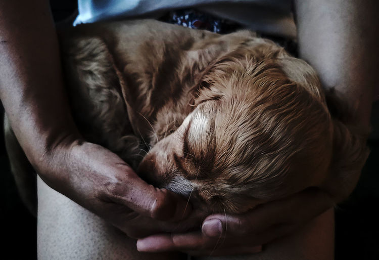 Close-up of a sleeping puppy in human hands