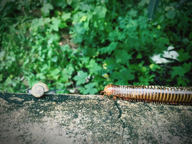 When we met... Lol, I reaaly enjoy before and after shot this one.... Animals In The Wild uiGreen ColorlPlantaOutdoorsorAnimal WildlifeiNo PeoplepClose-up-InsecteDayday Millipedes Snail🐌