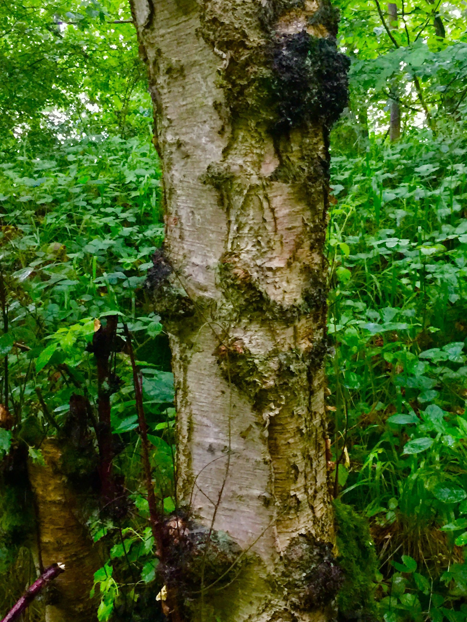 tree trunk, tree, growth, nature, green color, day, plant, forest, no people, outdoors, beauty in nature, close-up