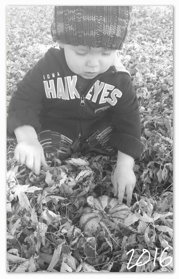 Searching through fall Pumpkin Search Toddler  Leaf Leaves Autumn Childhood Day Grass Outdoors One Person People