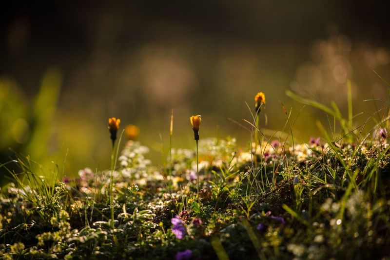 Growth Nature Flower Beauty In Nature Selective Focus Field Fragility Plant Outdoors Close-up Freshness No People Day Grass Mushroom Flower Head Fungus Toadstool Animal Themes Fly Agaric