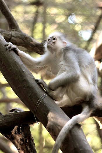 Look like old monkey king Animals In The Wild Animal Wildlife Nature Zoo Animal Themes Old Photo Photography Photographer Eyeemphotography Stockphotography Fotografi Stockphoto Monkey Animals Primate Outdoors