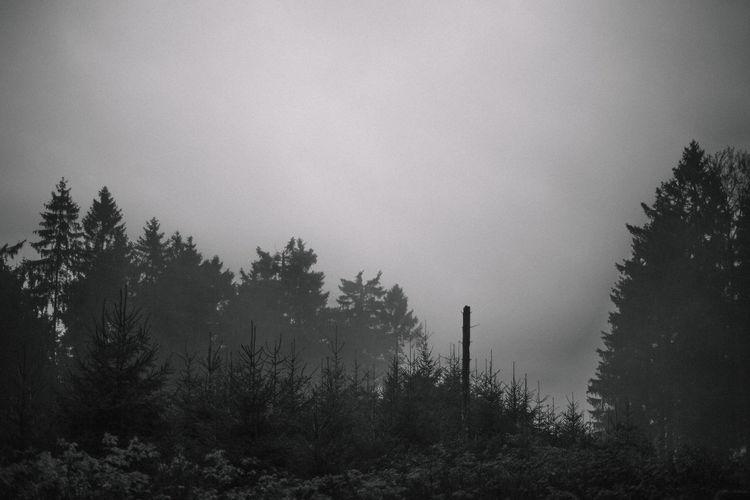 moody autumn