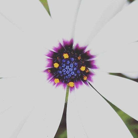 Bbft_amazing_flowers Flowersandmacro Floralwaltz Flowers Af_floral Af_macro➡🔎macro Purple White Purplecrayon_orange Andthepurplecrayon_ffff