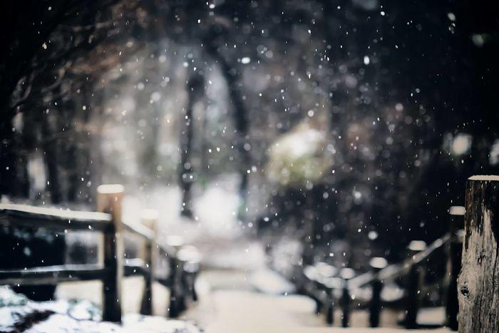 Snow Winter Freeze Frame Winter Wonderland