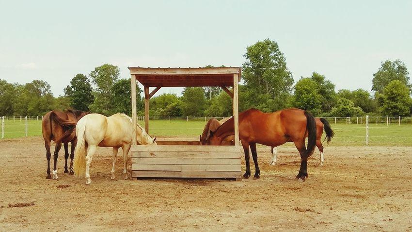 Horse Photography  Horse Horses Field Barn