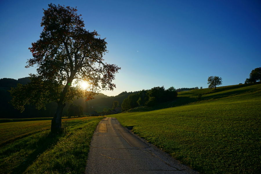 Against The Light Against The Sun Clear Sky Grass Growth Landscape Nature No People Outdoors Road Scenics Sunlight Sunset The Way Forward Tranquil Scene Tranquility Tree