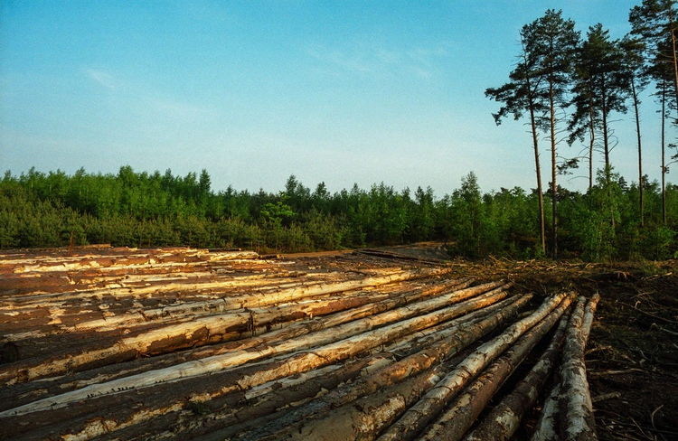 Block Clogs Cutting Cutting Trees Deforestation Deforestation Effect Deforestration Environment Environmental Damage Environmental Issues Forest Landscape Log Logs Lumber Industry Nature Nature No People No People, Outdoors Stack Timber Tree Tree Wood - Material
