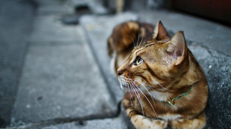 """""""If cats could talk, they wouldn't"""" One Animal Animal Themes Close-up No People Outdoors Beautiful Amazing Speechless Austria Beauty Huawei EyeEm Best Shots Beauty In Nature Moments Eyes Brown Brown Eyes Qutoes Day Animal Cat Cats Tiger Pets Photography"""