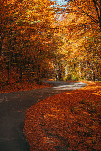 www.instagram.com/pontosanpele Country Road Offroad Autumn colors Autumn Background Wallpaper Backgrounds Wallpapers Orange Leaves Orange Leaf Orange Nature Warm Nature Hikingadventures Transylvania Pele Photography Green Nature Water Sunset Sky Autumn Collection Leaves Fall Empty Road Country Road Countryside Mountain Road Maple Leaf Leaf Vein EyeEmNewHere Autumn Mood